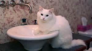 papate dans l eau(chat)