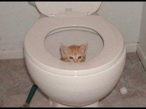 tomber dans les vc...(chat)
